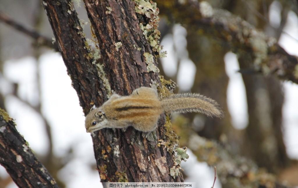 松鼠 小动物 野生动物 裂齿动物 鼠类 摄影 生物世界 野生动物 72dpi