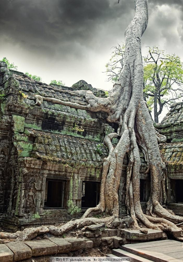 泰国建筑风景图片素材 泰国建筑风景 树木 树根 文明古迹 建筑古迹