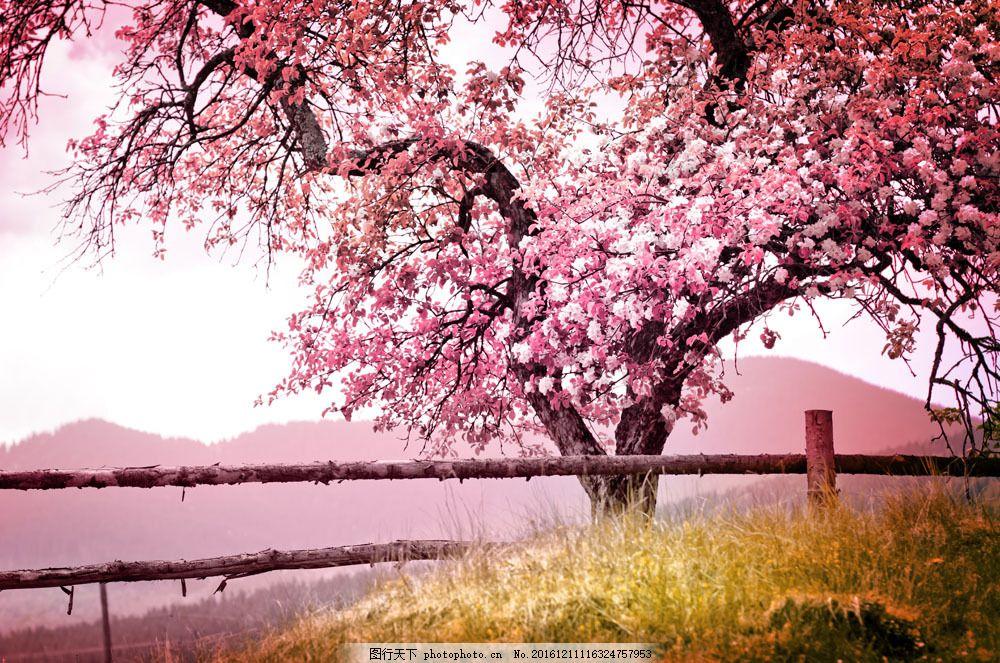 美丽花树风景图片素材 美丽花树 粉红花树 桃花 花树 花朵 植物 花枝