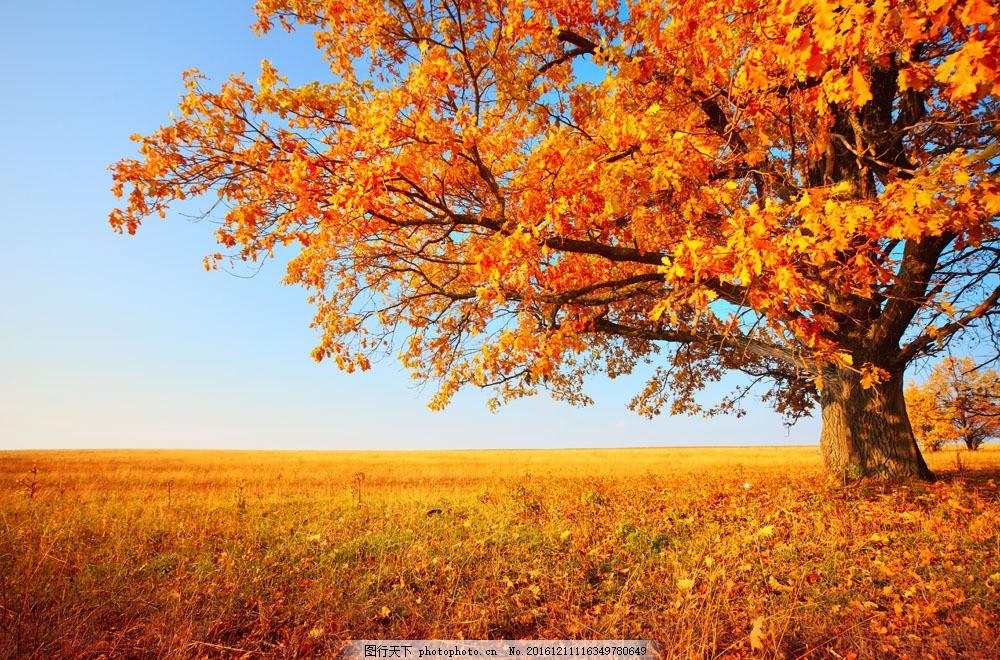 美丽秋天草原枫树风景图片