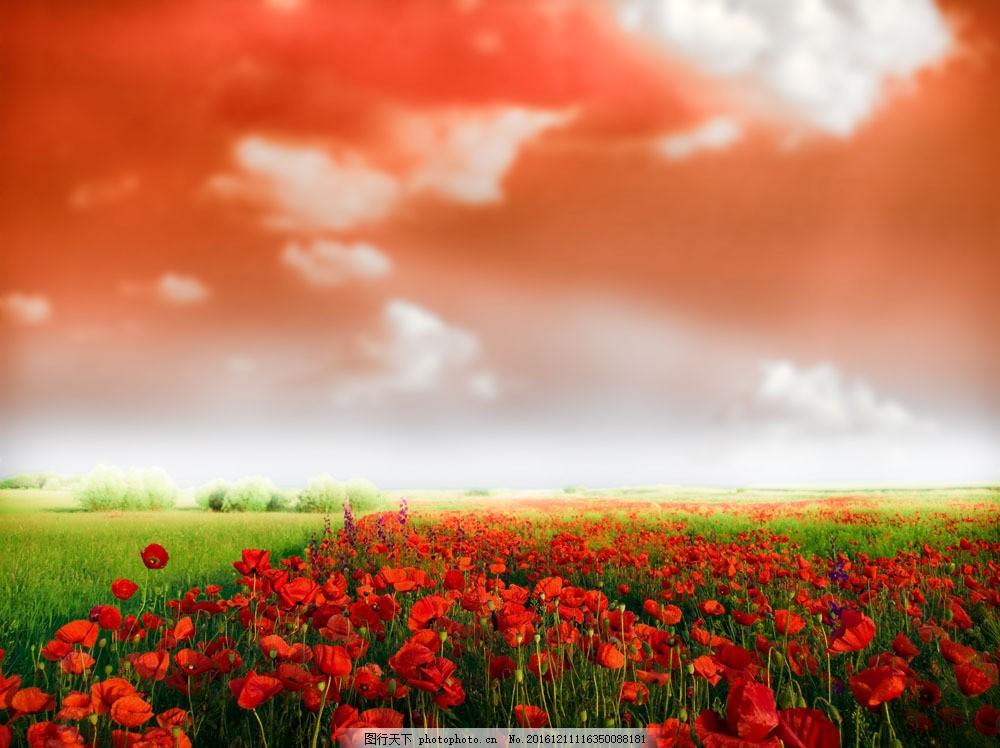 彩云 植物 草地 草 花朵 鲜花 红色花朵 山水风景 风景图片 图片素材