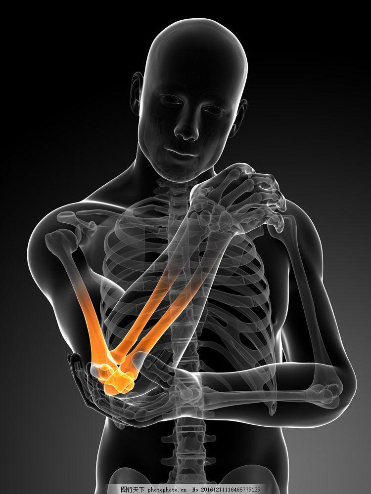 肘关节 手臂关节 人体器官 医学图片 骨架 骨骼结构 医疗护理 现代