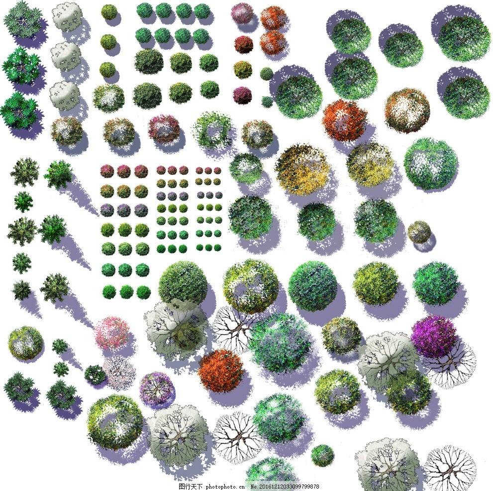 绿化 平面 图例 园林 景观 灌木