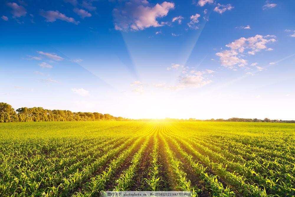 阳光下的农田图片素材 农田 树木 自然风景 农田摄影 阳光 太阳 农业