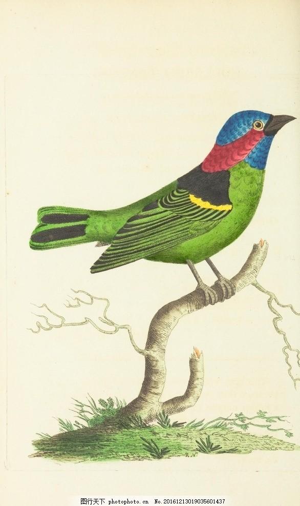 水彩画 鸟 小清新 花虫画 虫鸟花 虫鸟画 花鸟画 画鸟 画小动物