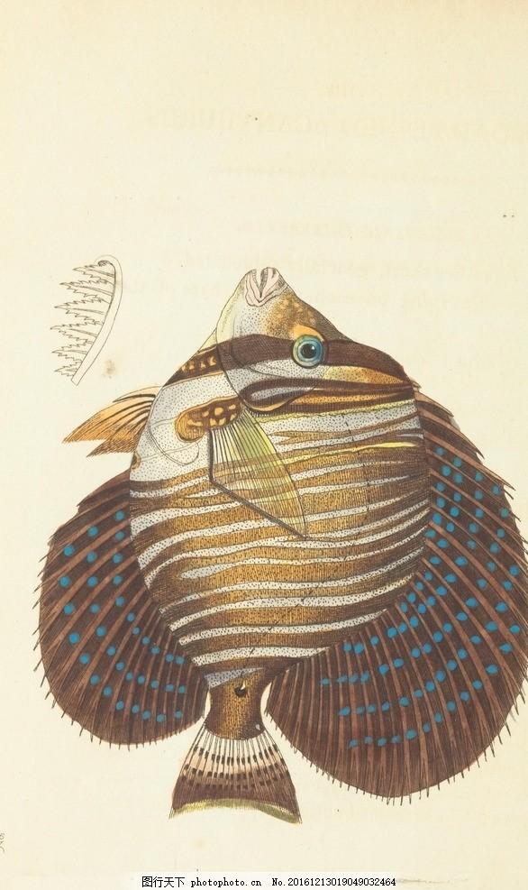 水彩画 鱼 小清新 花虫画 虫鸟花 虫鸟画 花鸟画 画鸟 画小动物