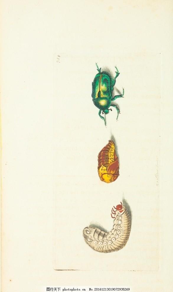 水彩画 小清新 花虫画 虫鸟花 虫鸟画 花鸟画 画鸟 画小动物