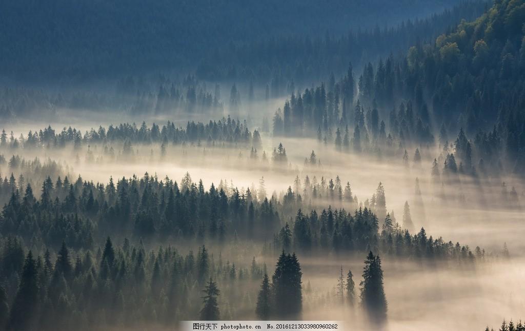 唯美 风景 风光 旅行 自然 秦皇岛 森林 迷雾森林 迷雾森林景区 摄影