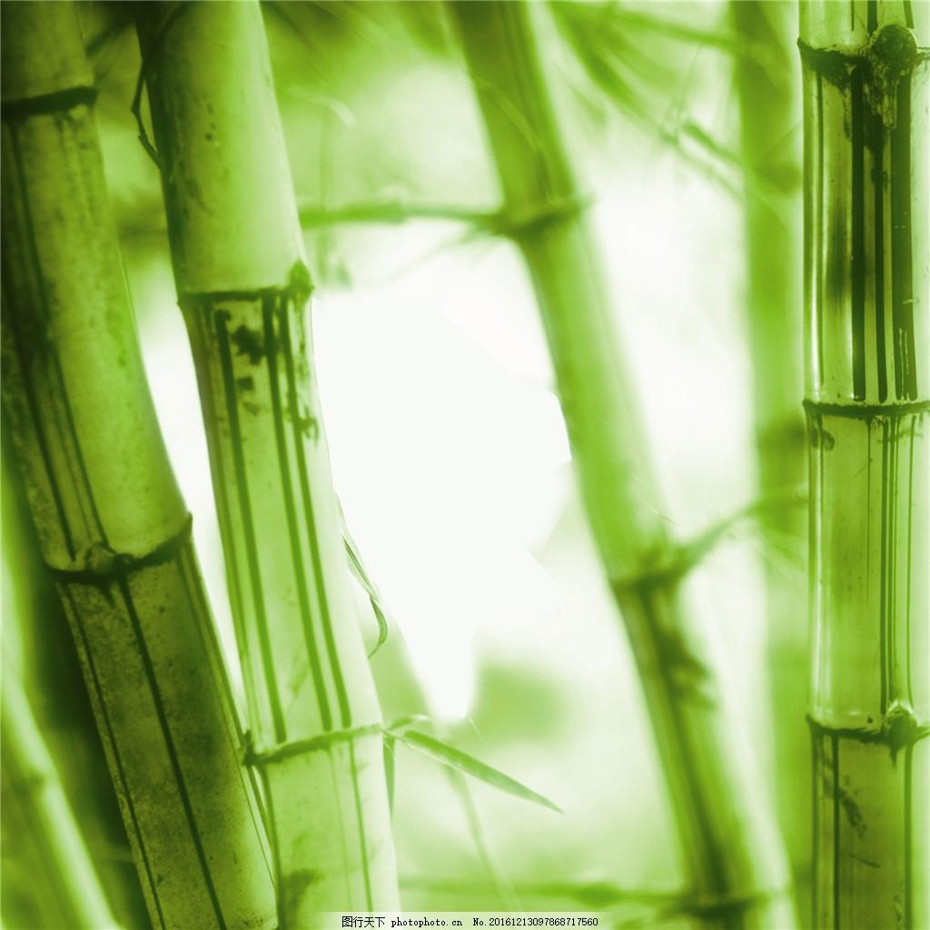 壁纸 风景 植物 桌面 1024_1024