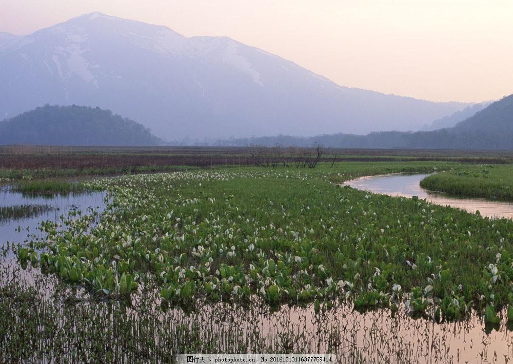 乡村风景摄影图片素材 美丽风景 风光 景色 树木 森林 田园 农田 稻田