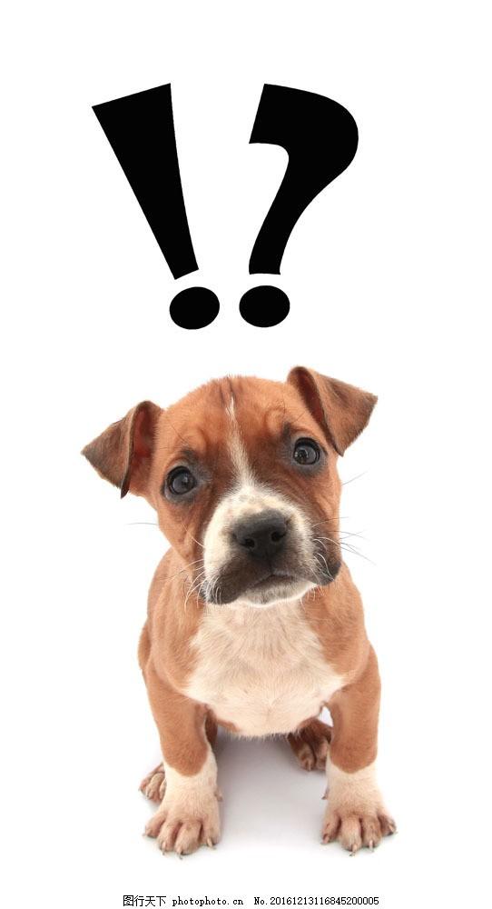 思考问题的小狗图片素材 动物 泰迪狗 小狗 可爱动物 思考 问号