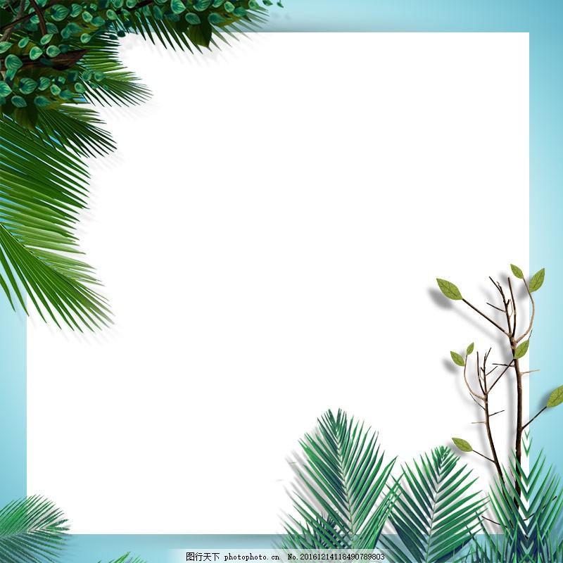 针叶植物白底背景 针叶植物 植物 清新 淡雅背景 简洁背景