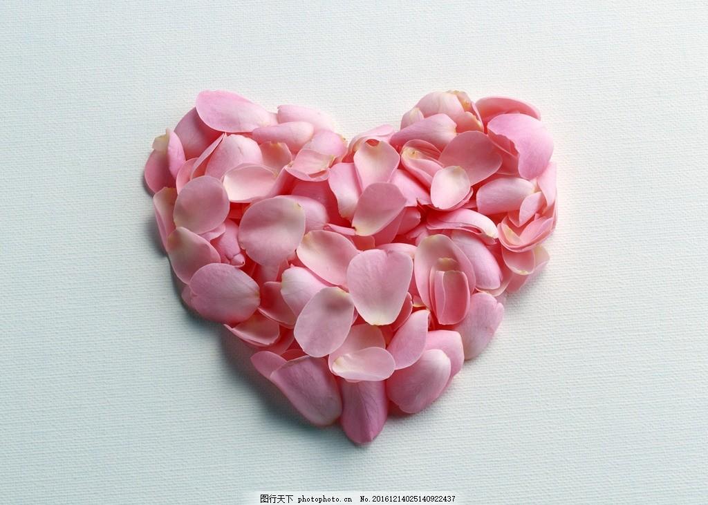 玫瑰花花瓣 玫瑰花 花瓣 粉色花瓣 心形 心形花瓣 摄影 生物世界 花草图片