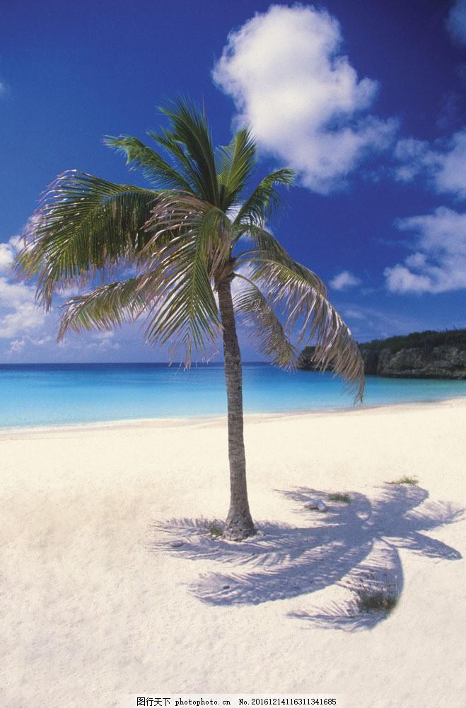 沙滩上的椰子树图片,沙滩上的椰子树图片素材 海 椰树