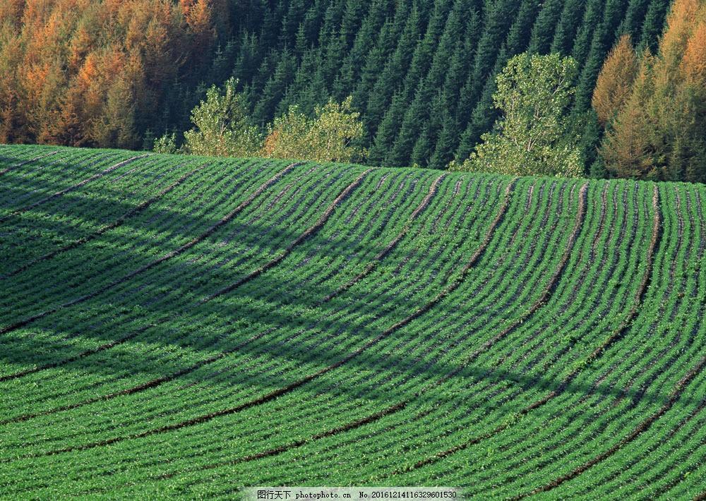 田园树林风景图片素材 四季风景 美丽风景 美景 自然景色 树木 田园