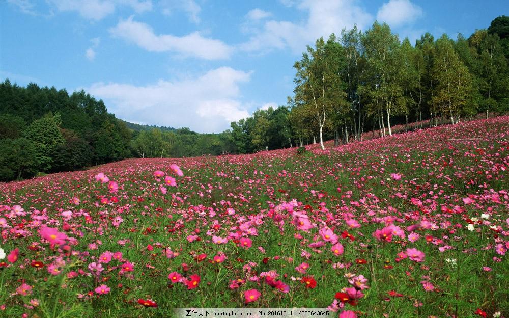粉色花朵 蓝天 天空 白云 草地 树林 山水风景 风景图片 图片素材