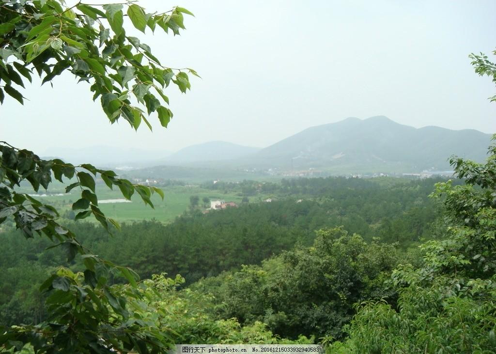 山石风景 石头 树木 阳光 竹子 春天 夏天 野外 山沟 大山 漂亮 迷人