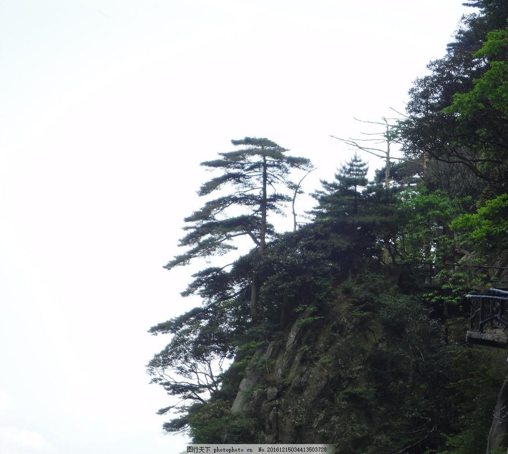 悬崖 树 岩石 松 植被 山与树 摄影 自然景观 山水风景 72dpi jpg