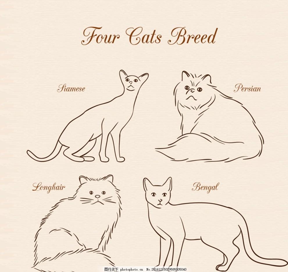 宠物猫咪 可爱小猫 宠物猫 猫咪 素材 动物 各种素材 平面素材 设计