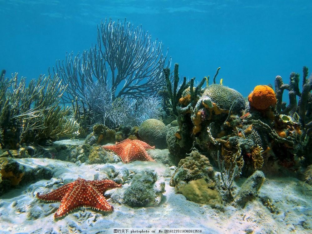 珊瑚 海星 植物 水底 沙滩 海洋 景区 海洋世界 大海图片 风景图片
