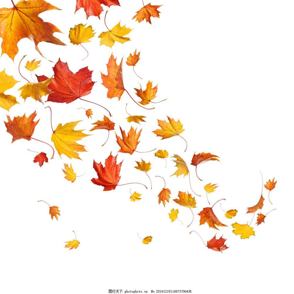 飘落的树叶 飘落的树叶图片素材 落叶 秋季树叶背景 黄叶 叶子图片