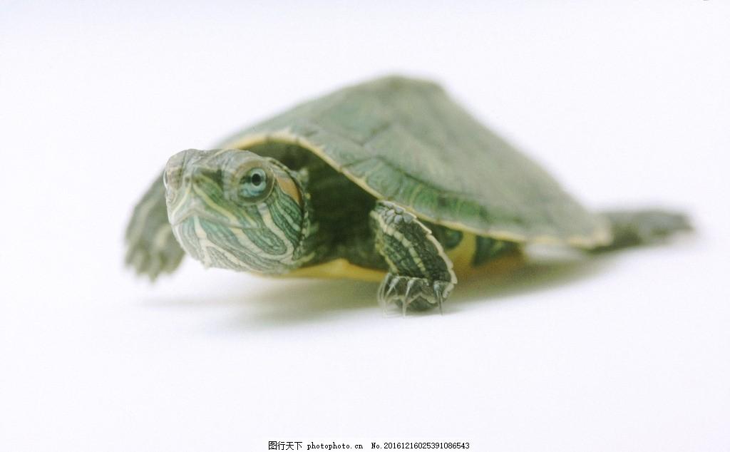 乌龟的编制方法图解