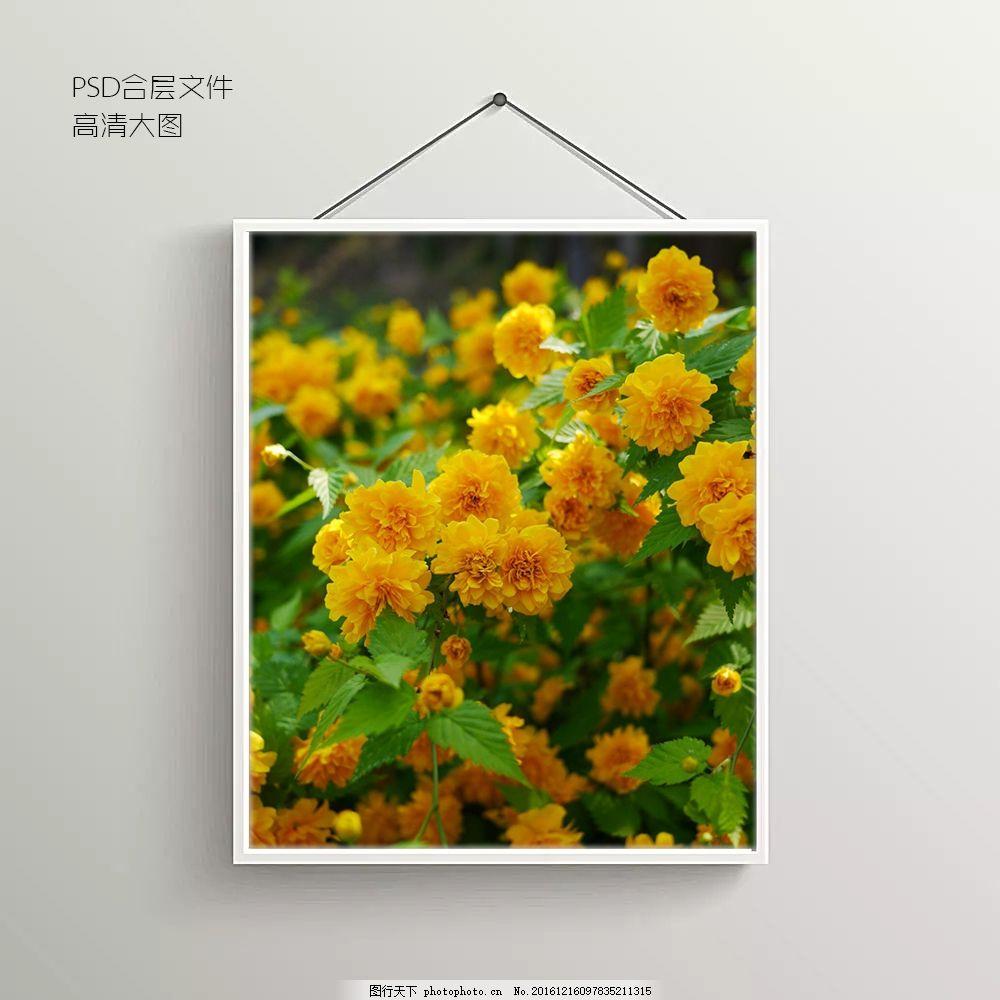 菊花花卉无框装饰画 背景墙 背景图 抽象背景图 室内背景图 玄关
