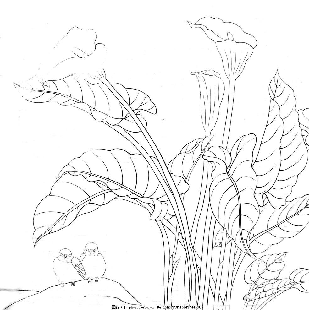海芋花 美术 手绘素描 黑白 绘画 白描 绘画素材 广告设计 书画