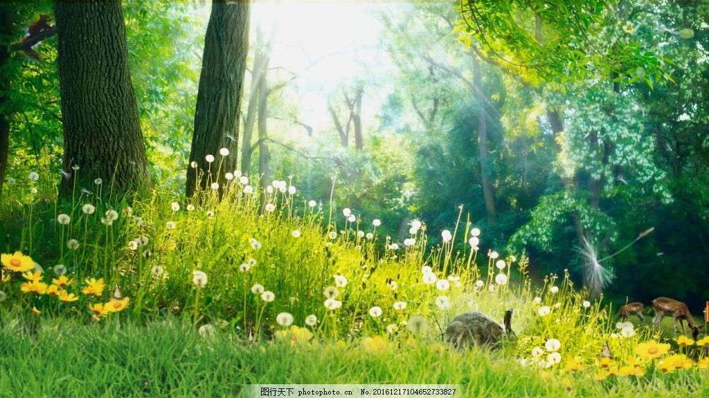 春天的树林