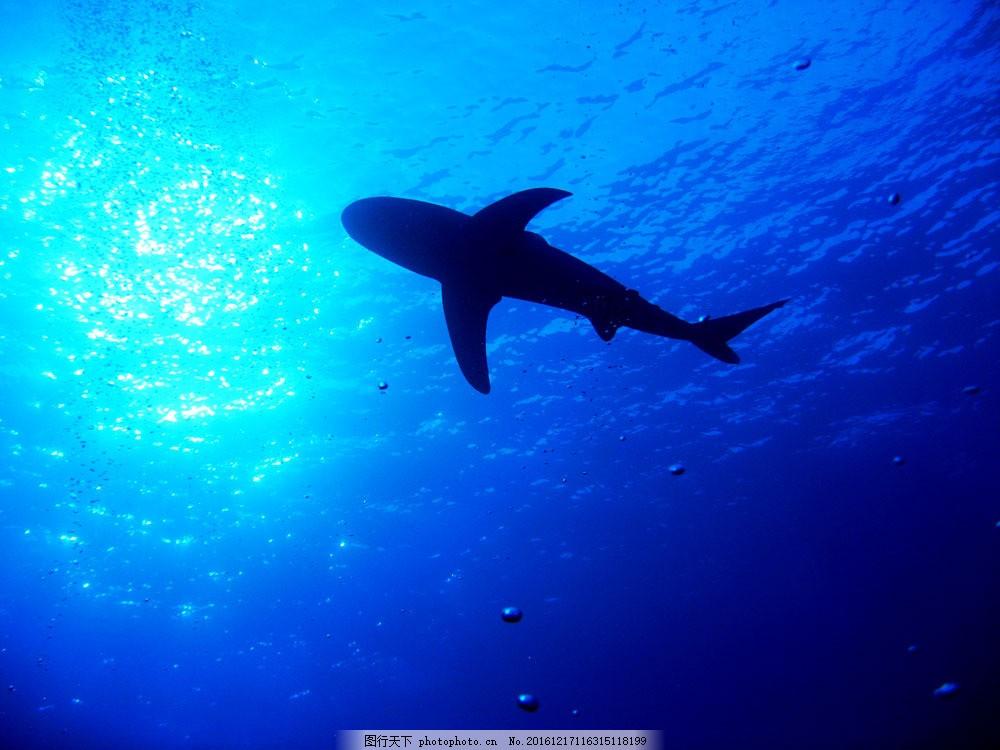 海底风景图片