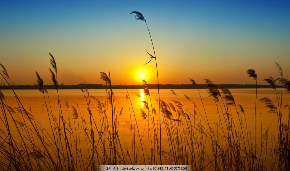 落日海边的芦苇 落日海边的芦苇图片素材 黄昏 人物剪影 山水风景