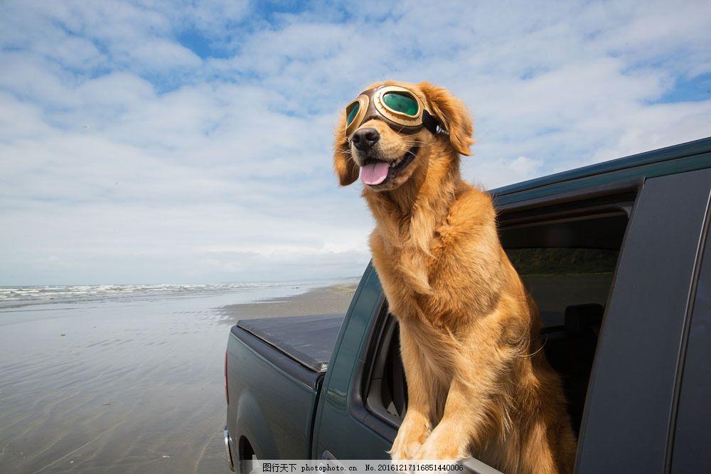 坐车看风景的小狗图片
