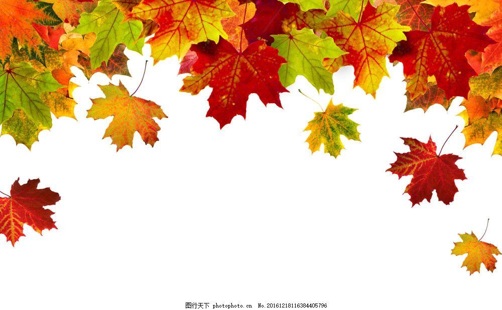 秋天落叶背景图片素材 落叶 秋天枫叶 秋天树叶背景 叶子 黄叶 梧桐叶
