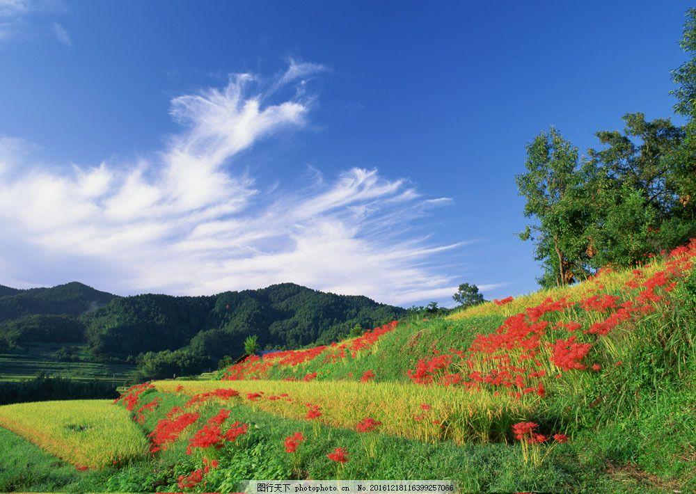 美丽田园风景图片素材 四季风景 美丽风景 美景 田园风光 春天风景