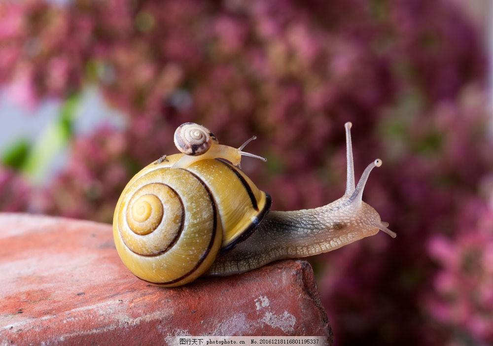 小蜗牛 蜗牛摄影 动物昆虫 动物摄影 昆虫世界 生物世界 图片素材