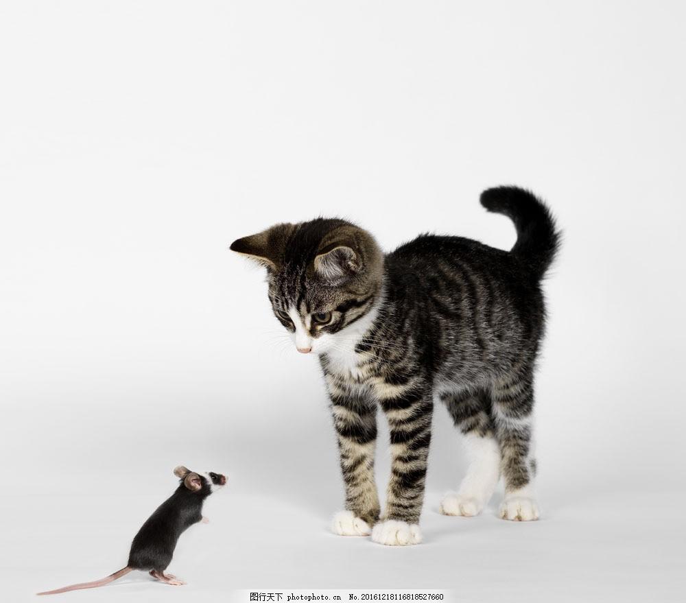 猫和老鼠图片素材 狗 小狗 宠物狗 宠物 小狗素材 小狗摄影 动物 可爱