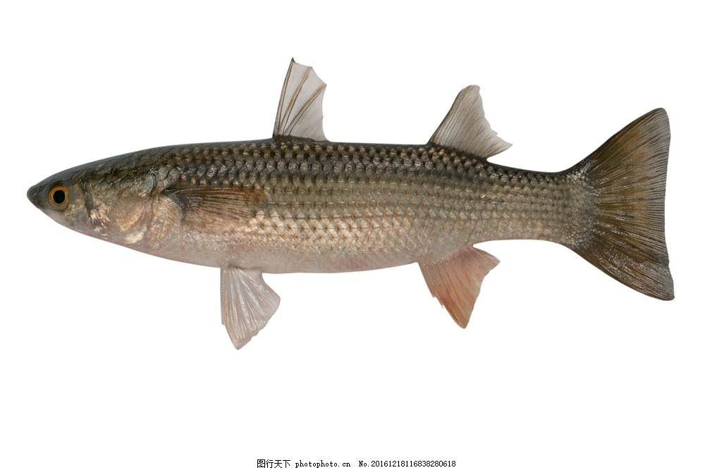 鱼 鱼类动物 鱼类摄影 海鲜 海底鱼类 海鱼 水中生物 水中生物 生物