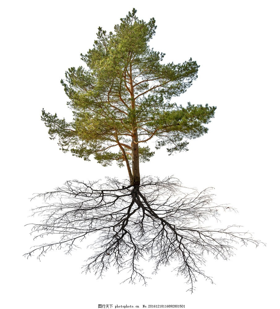 树根大树图片素材 树根 古树 大树 绿树 树木 树林 绿叶 叶子 树枝