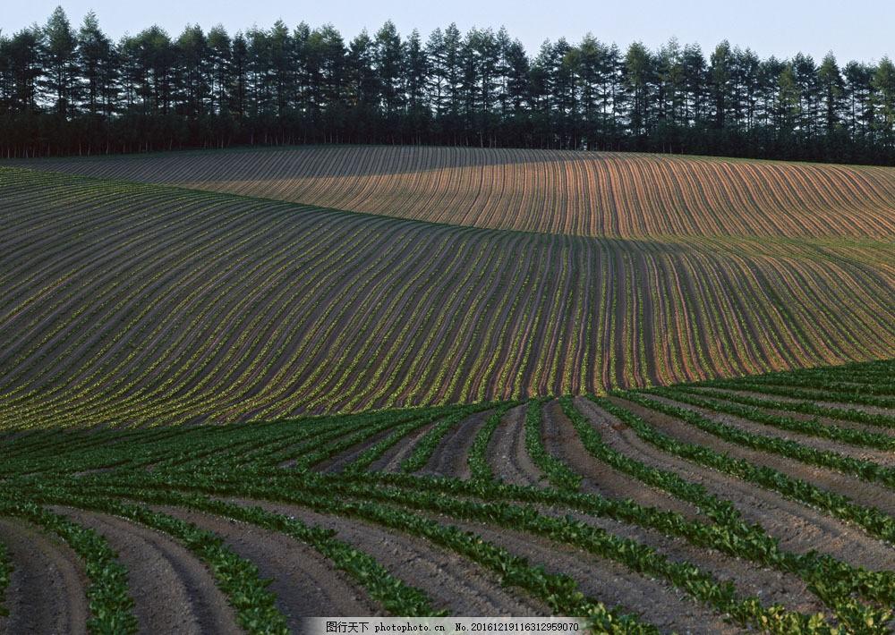 美丽田园图片素材 四季风景 美丽风景 美景 自然景色 树木 田园风光