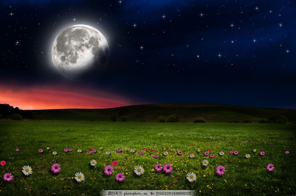 草地上的鮮花 草地上的鮮花圖片素材 月亮 花朵 美麗景色 美麗風景