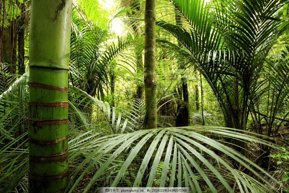 热带丛林与棕树林图片