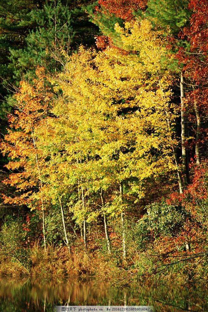 秋天湖泊树林风景图片
