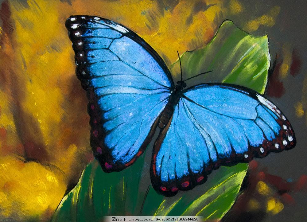 水彩画蝴蝶图片素材 蝴蝶 昆虫 动物 野生动物 动物世界 动物摄影