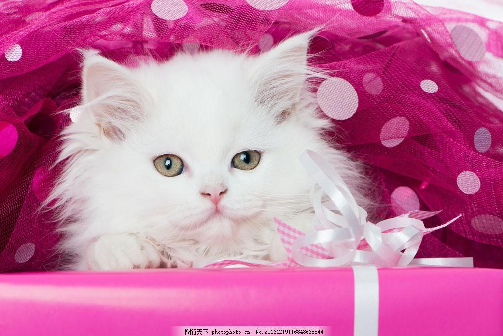 可爱猫 宠物猫 小猫 猫咪 动物 动物世界 猫咪图片 生物世界 图片素材