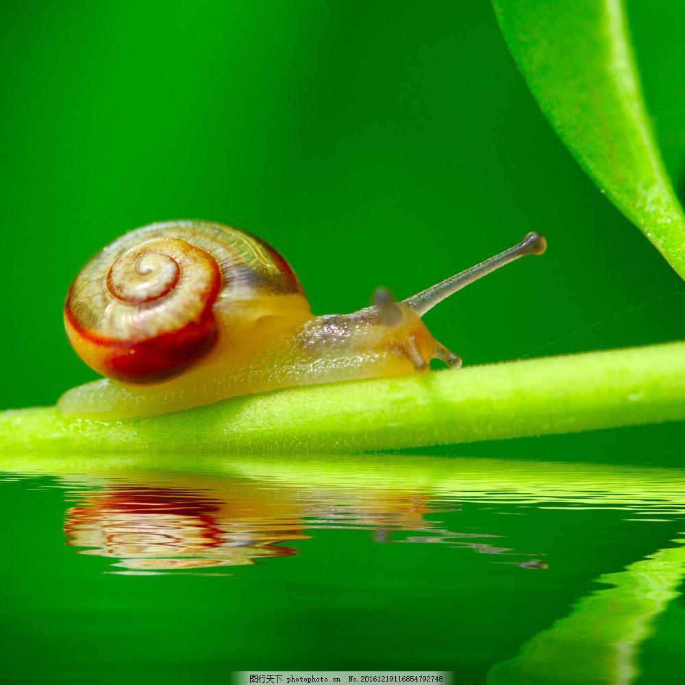 蜗牛 蜗牛图片素材 动物 动物世界 摄影图 野生动物 陆地动物
