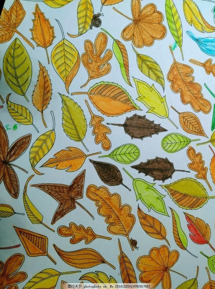 手绘树叶 漂亮的秋叶 各种树叶 插画 五彩缤纷 秋风扫落叶 手绘插图