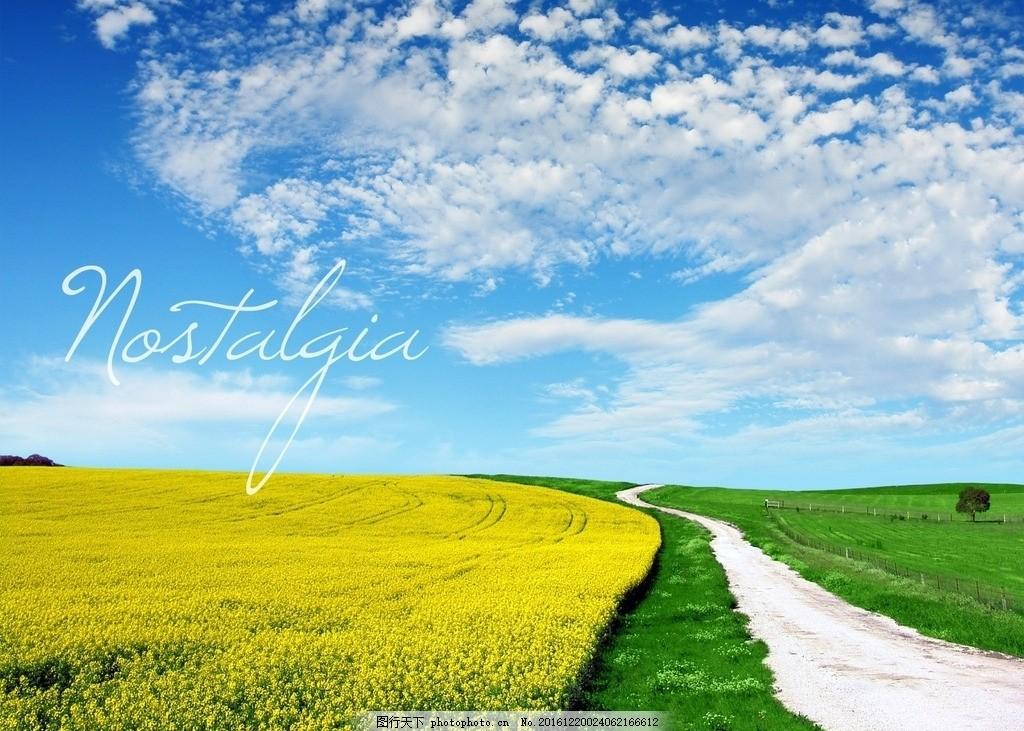 藍天綠地 藍天 綠地 夢幻藍 藍天草地 藍天白云 花草 自然景色素材