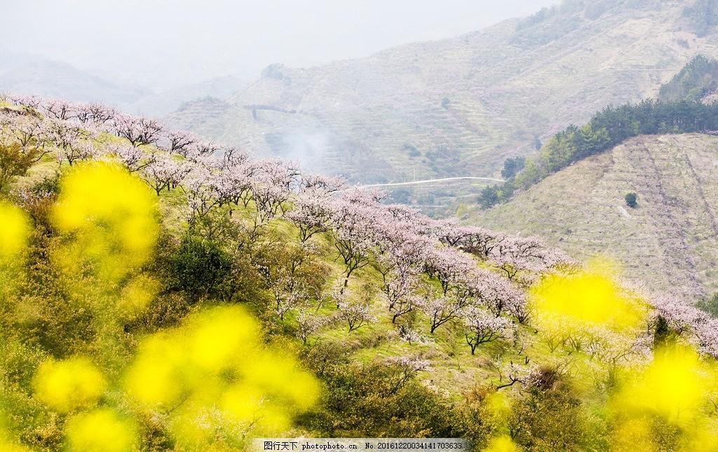 桃花 桃花林 春天 浅景深 唯美 摄影 花草 摄影 旅游摄影 自然风景
