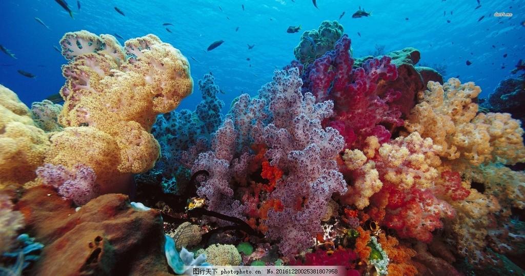 海底世界 摄影 照片 景色 风景 珊瑚 鱼