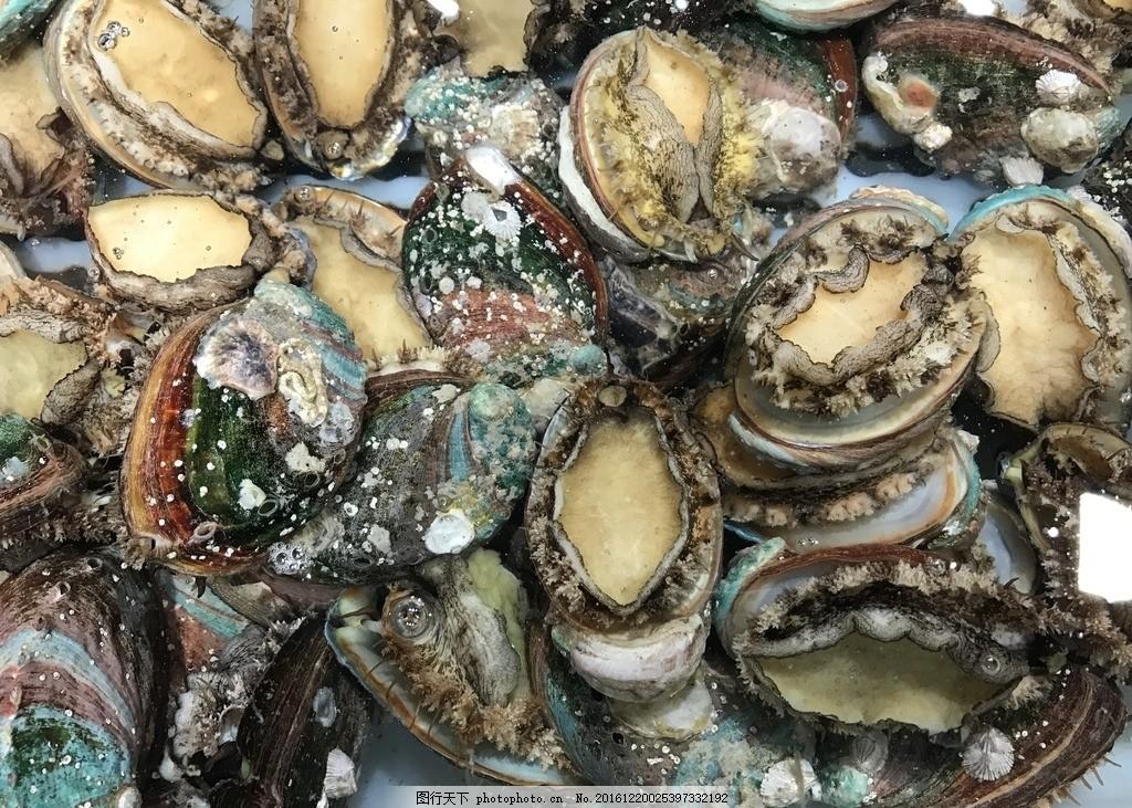 鲍鱼 鲍鱼仔 海鲜 贝类 鲜活 摄影 生物世界 海洋生物 72dpi jpg